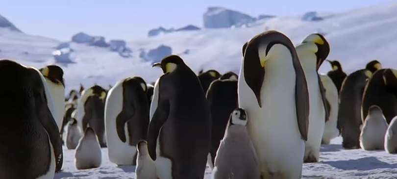 Planet Earth Discovery Plus